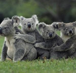 koalalalala's Profile Picture