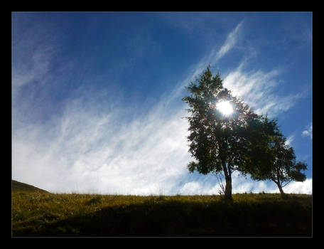 The Sun behind the tree