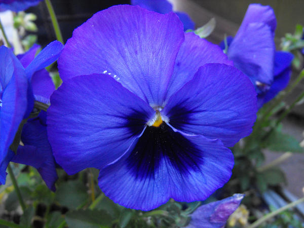 Violets are blue by zielege on DeviantArt