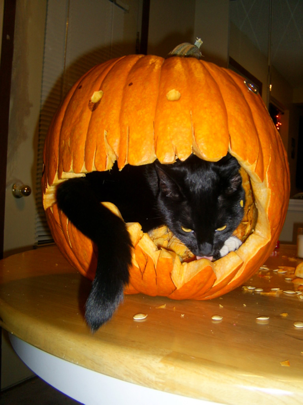 A cat can carve too by kyraal on deviantart