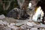 Cat by Lyalta