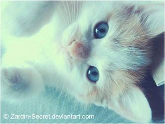 My cat mimo by zardin-secret
