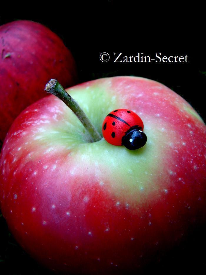 P O M M E by zardin-secret