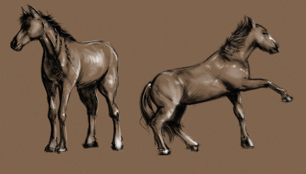 Horse Studies by FaceGrater