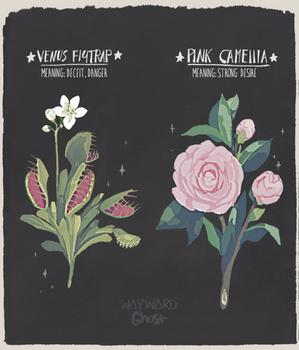 Venus Flytrap and Pink Camellia