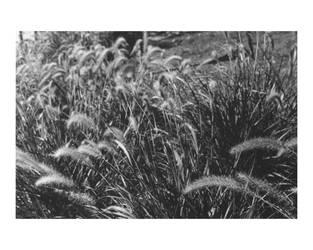 The wheat fields by archangelhunter