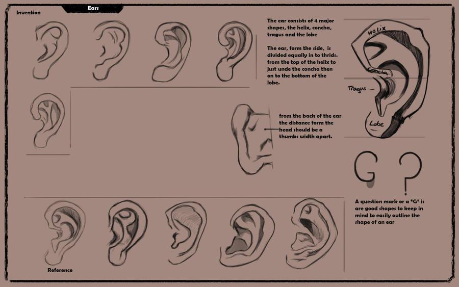 Ears by Dale-Walters