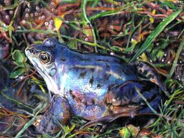 Frog 1 by raidan1280