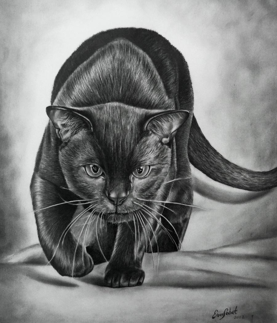 black panter wallpaper