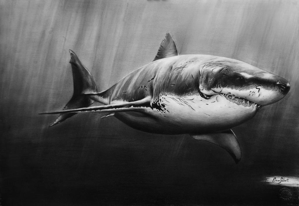 shark,ercansebat by ercansebat
