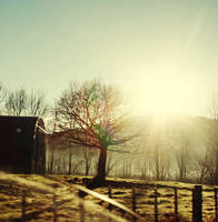 Winter Morning.. by sayra