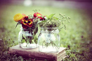 flowers and herbs by sayra