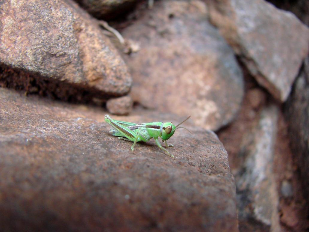 Green creature by Mon-Etoile-Filante