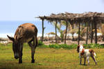 Donkey life by Mon-Etoile-Filante