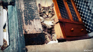 Weathered (Cat Photography) by Solaresque