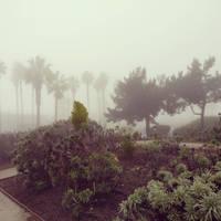 Foggy Days by mb67