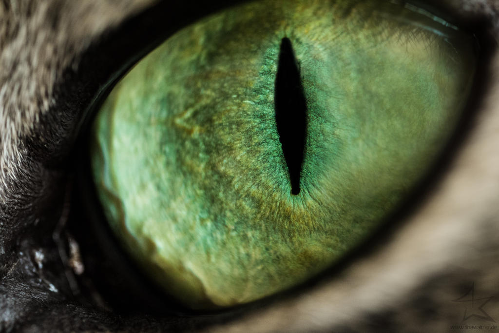 Cat eye by TinaWaltner