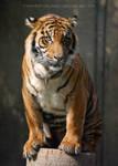 Tiger and his Stump by PinchOfPixelDust