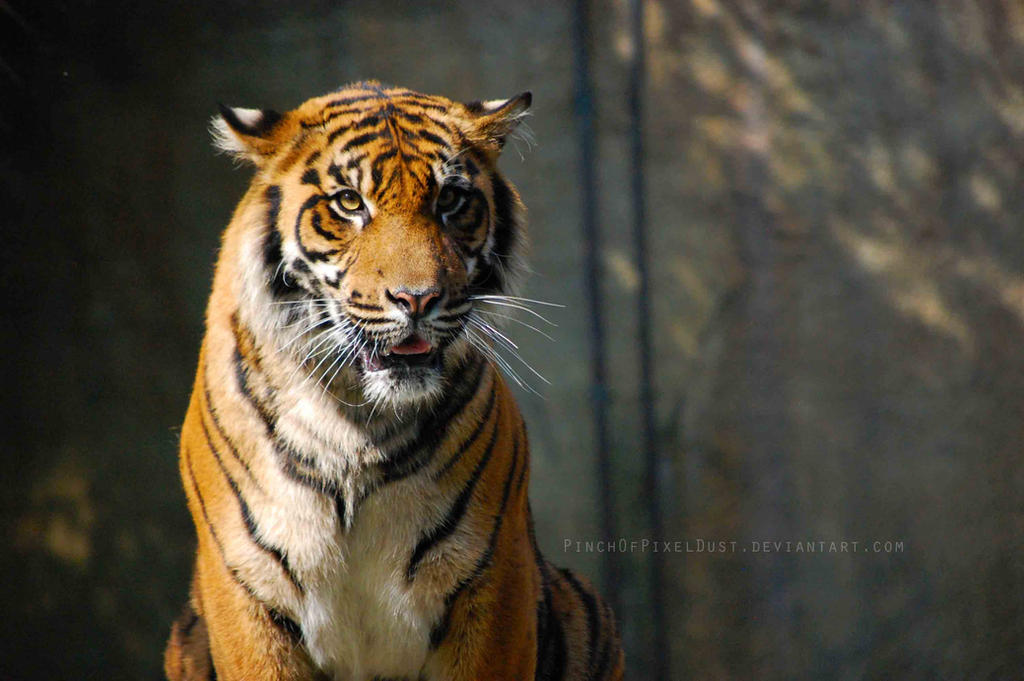 Smile for the Camera, Mr. Tiger! by PinchOfPixelDust