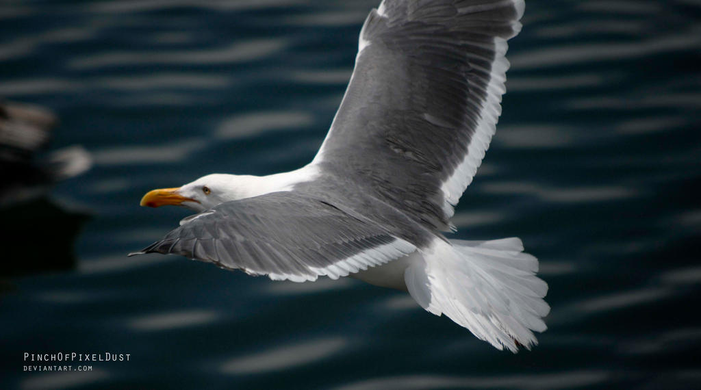Seagull in Flight by PinchOfPixelDust