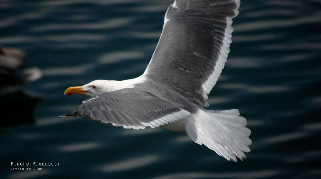 Seagull in Flight by PinchOfPixelDust