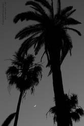Palm Tree Moonrise by PinchOfPixelDust