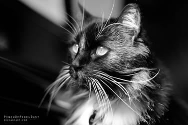 Olsen by PinchOfPixelDust