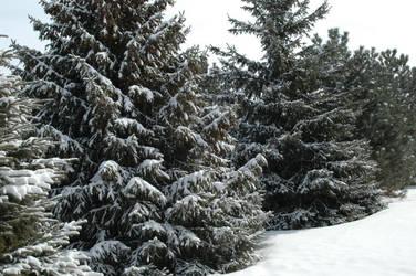 Snowy Trees by ElvenSheepStock