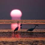 Sunset Trinity by Alpharius