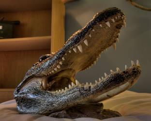 Croc stock by wilddoug