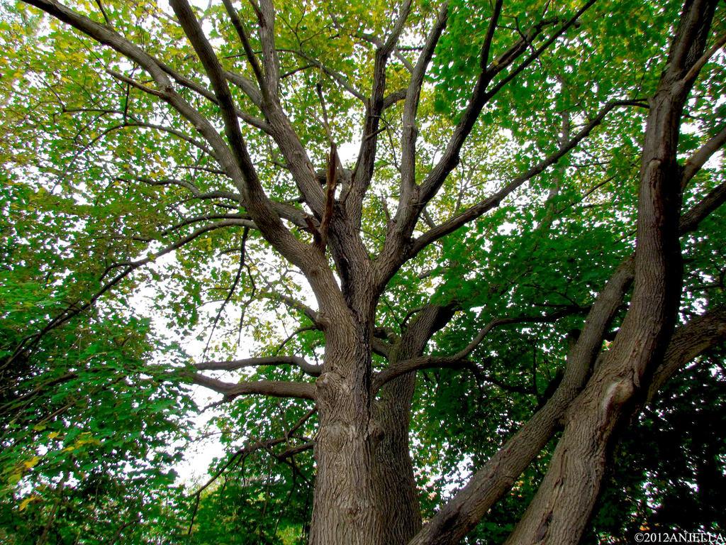 Tree Side View by Anj3lla on DeviantArt: anj3lla.deviantart.com/art/tree-side-view-298997620
