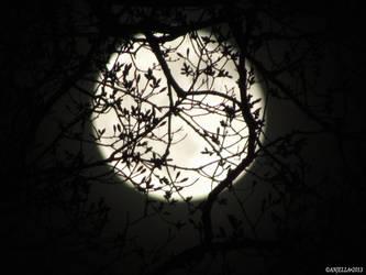 Melodic Moon by Anj3lla