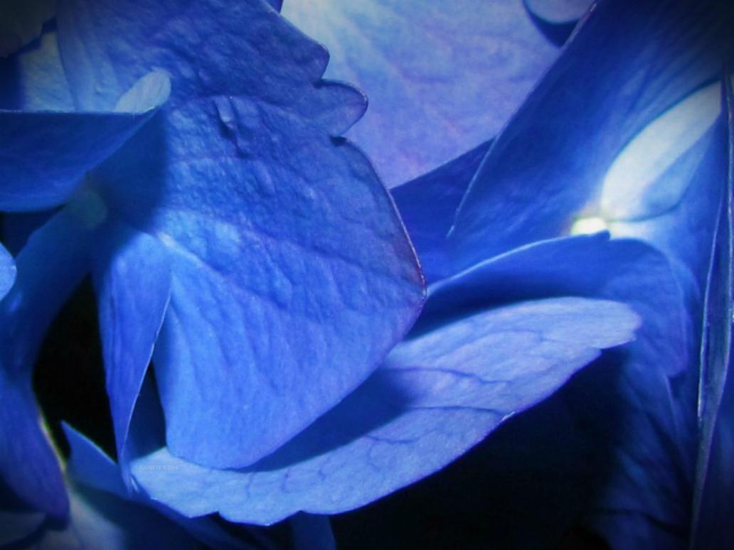 Deepen Azul by Anj3lla