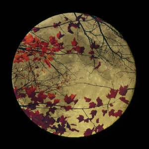 Moon DreamWeaver by Anj3lla