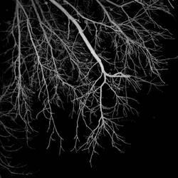Limbstruck by Anj3lla