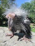 vulture pirate