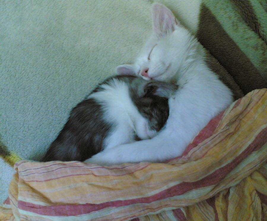 tender moments... by RinoaBC