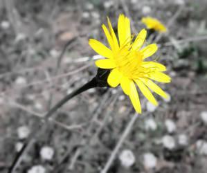 Yellow and Black by paran0idx