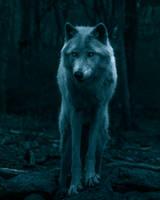 wolf in the dark by diego022