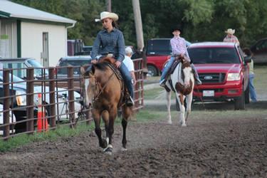 Western Horse Walk - STOCK
