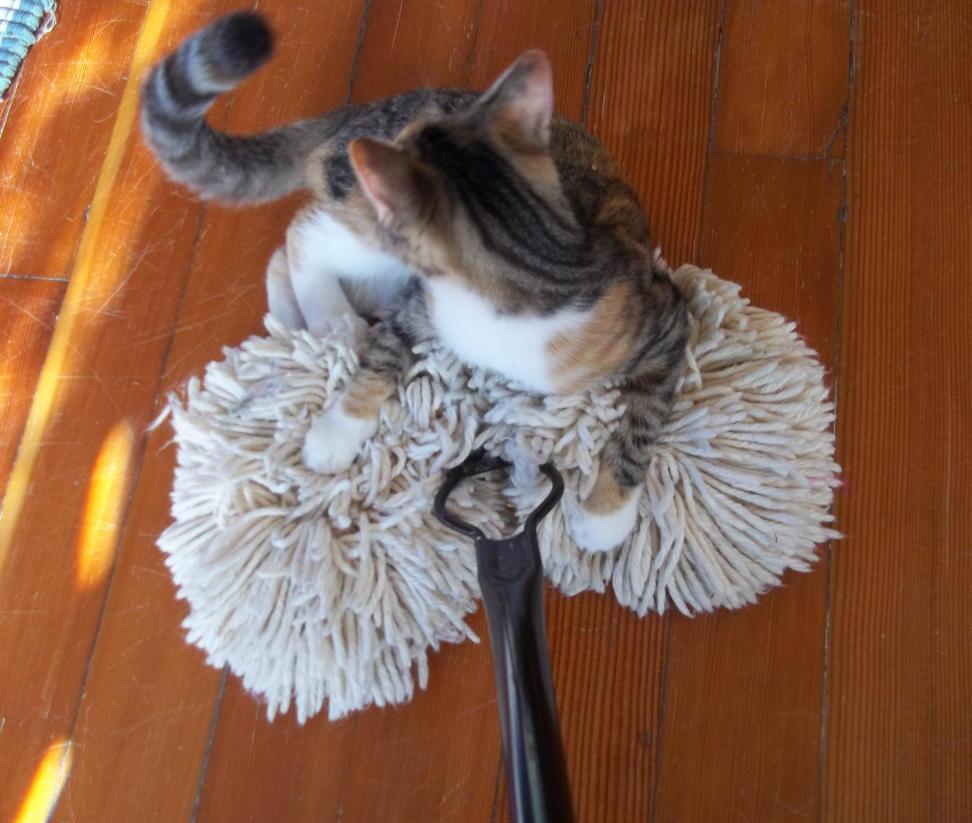 The Dry Mop Must Die by elecktrum