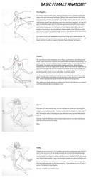 Basics of Female Anatomy by liliesformary