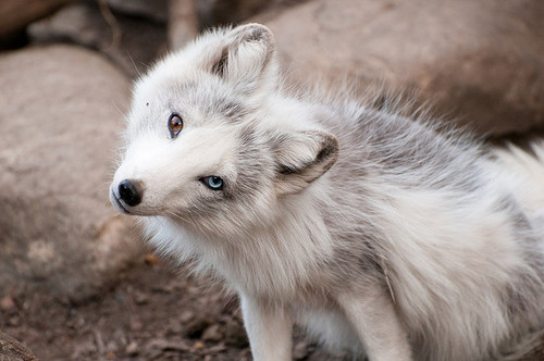 Wut? by wolflolplz