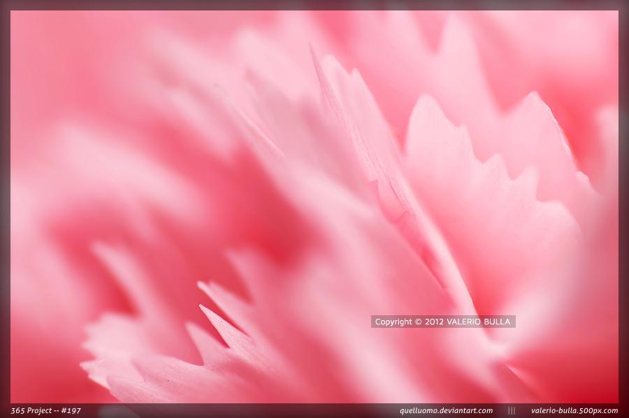 Soft Blades by ValerioBulla