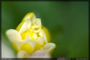 Yellow bud by ValerioBulla