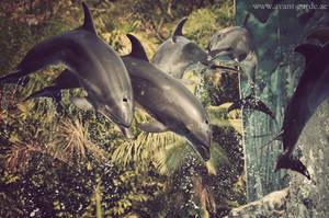 Dolphins by NawalAckermann