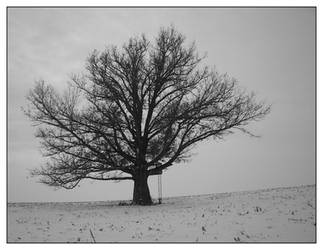 Snow, Corn and a Lone Tree by Mennonot
