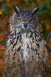 Eurasian Eagle Owl IV by Nushaa
