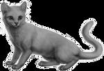 Cat Base (P2U)