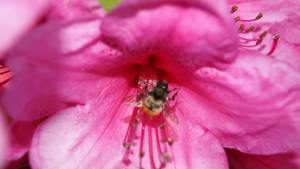 Pretty Pink Flower, Stingy Bee